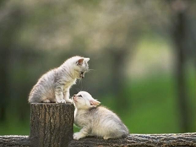 gatos en los troncos