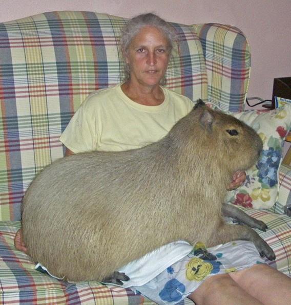 Ratonazos en casa la foto que me gusta - Ratones en casa eliminar ...